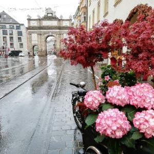 【オーストリア】アルプスに囲まれた街インスブルック2日目は雨