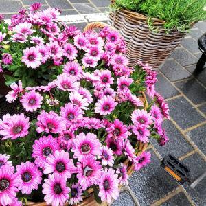オーストリア旅行記9)インスブルック雨の日はレストラン&買い物も良し|海外女一人旅ブログ