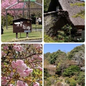 桜の回廊とベーカリーランチ