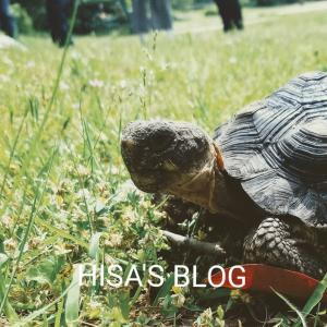 初めまして!(ブログの方針) #ひさのblog