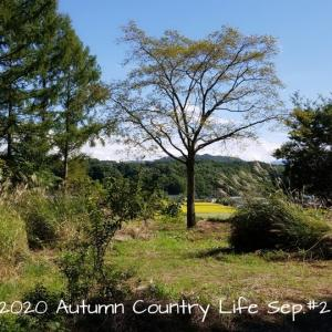 2020 Autumn Country Life Sep. #2