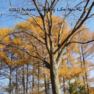 2020 Autumn Country Life Nov.#6