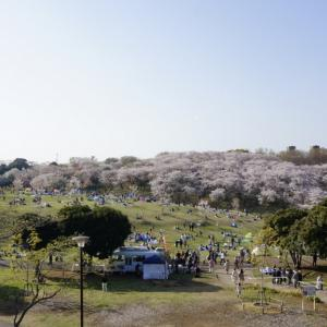 横浜 根岸森林公園でお花見散歩