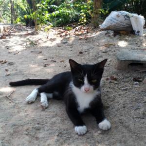 CAT'S EYE 猫の目
