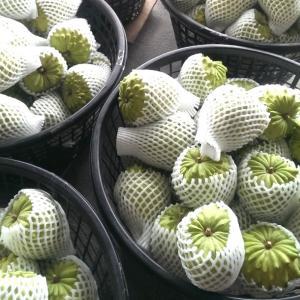 ●台湾新聞●オーダーメイド型果物宅配サービス
