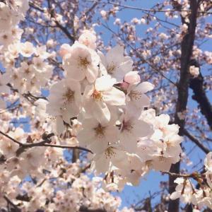 【お知らせ】4月のレッスンお休みします