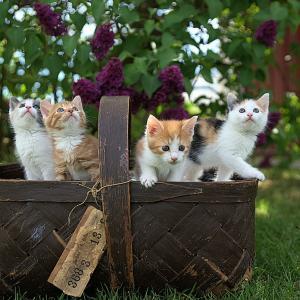 【ギネス級の可愛さ♪】今YouTubeが熱い☆オススメの猫動画3選!