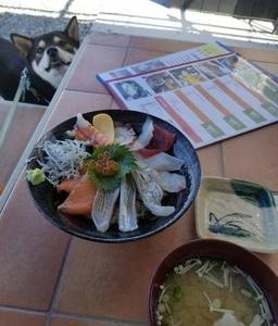 くーちゃんと淡路島に行ってきました。犬と旅行
