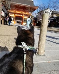 くーちゃんと京都へ 犬と京都へおでかけ ワンちゃんと京都