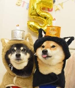 夏輝ちゃん圭汰くんがくろさちハンドメイドの柴犬に変身コートを購入してくれました。ありがとうございます。