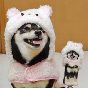 ぽてちゃん・こけぽてちゃんがくろさちハンドメイドのパンダに変身コートを購入してくれました。ありがとうございます。