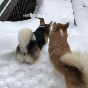 雪遊びの続き…