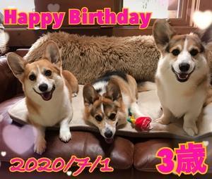 3パピHappy Birthday