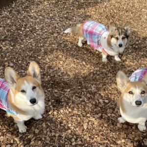meekdog さんの春夏服第一弾