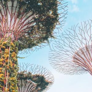 日本人がシンガポール旅行に来る前に知っておくべき驚きの8個の法律とは?ガム持ち込みで捕まるって本当?