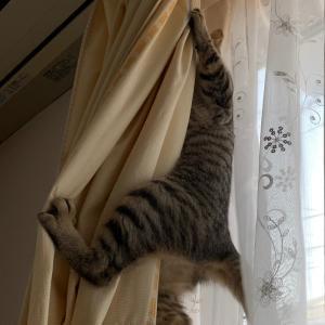 大きな地震にしがみつく子猫