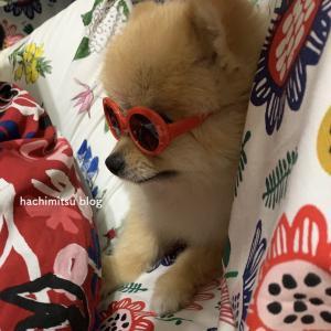 ■サングラスとメガネとはちみつ