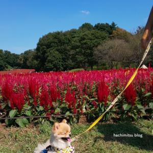 ■武蔵野森林公園に行ってきました