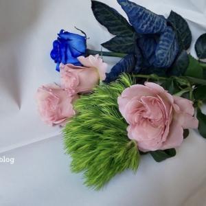 ■桜ぼちぼち花図鑑散歩 + 素敵な贈り物
