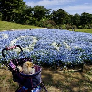 ■青い花の海で朝の散歩