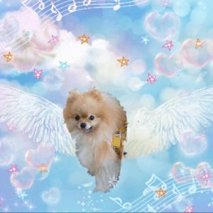 ■サプリメントウォーターROZAIモニターレポ⑩ + 天使のはちみつ