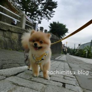 ■ポメラニアンと北海道の旅⑥:残念な羊蹄山 余市 小樽