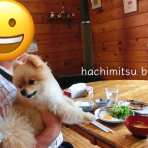 ■ポメラニアンと北海道の旅⑦:札幌 美瑛 富良野