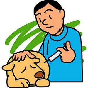 狂犬病予防接種率が低下しているらしい~なぜ犬だけ受けるの?