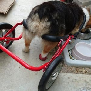 犬用車椅子『ドッグウォーカー』を愛犬仕様に少し改造してみた