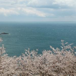 2021年お花見紀行 世界遺産鬼ヶ城は桜もスゴイって知ってた?