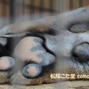 【大内山動物園】牛乳で有名な大内山にある全国でも珍しい私設の動物園