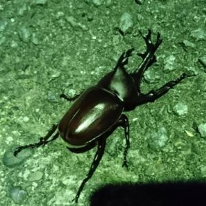 田舎の街灯は昆虫採集の優良ポイントだが最近は虫が無視する街灯が…【自由研究のヒント】