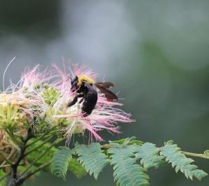 花と虫たち
