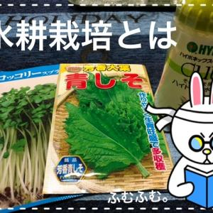 自給自足生活してみたいよね〜お家でできる野菜の水耕栽培にチャレンジ〜