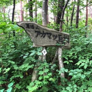 浅虫ウォーク第二弾‼︎赤松の巨木を見に行こう‼︎