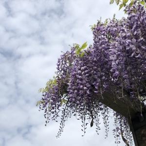 5月の合浦公園はイロトリドリ〜♪