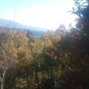 紅葉散策とキノコ狩り