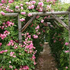 野趣あふれる庭 ロイズローズガーデン
