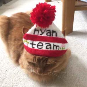 ■ ニャンチーム 猫用帽子