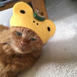 ■ イエローカエル帽のきなさん