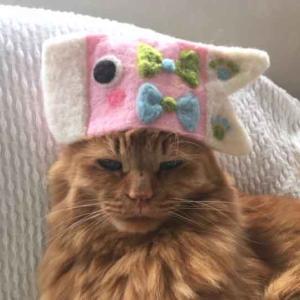 ■ 鯉のぼり帽 ピンク