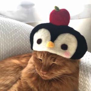 ■ペンギン帽 カラフルケープ