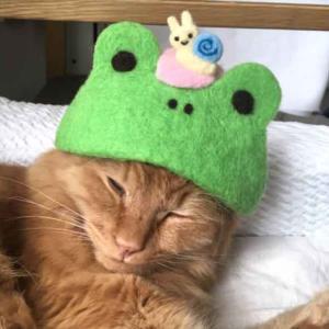 ■ グリーンカエル帽のきなさん