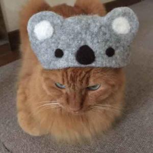 ■新作 猫用帽子 コアラ