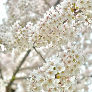 【告知】5月22日・30日ベビーキッズマッサージ♡