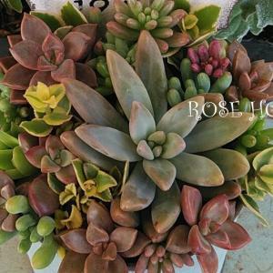 多肉植物の寄せ植え♪~秋になってから最初の1個目!