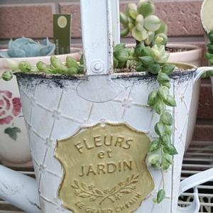 最近の庭作業☆彡~ネックレスたちの植え替え♪