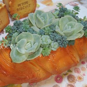 多肉植物の寄せ植え♪~秋冬への準備~☆彡