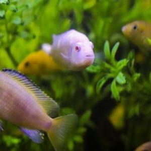 魚も人間と同じように仲間の顔を見分けることができる!?