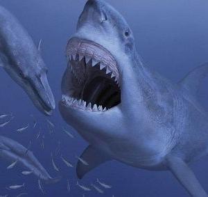 体長16mの巨大サメ・メガロドン、ワガママすぎて絶滅した?